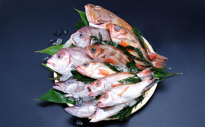 にかほ市様鮮魚セット
